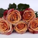 5本のバラの意味と花言葉は?他の本数の意味と色による違いも!