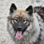 舐め犬プレイの魅力とは?バター犬との違いと舐め犬の体験談