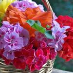 ゼラニウムの花言葉と贈る際の注意点!中には怖い意味も?