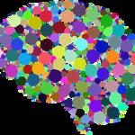 【診断】男脳と女脳の違いと特徴や恋愛傾向とは?脳科学的には嘘?