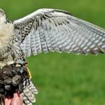 「能ある鷹は爪を隠す」は仕事で使えるのか?海外では通用しない?