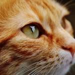 猫にはスピリチュアルな意味がある?猫が示すスピリチュアルメッセージ