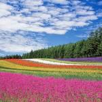 小清水原生花園の魅力・楽しみ方!花の種類や見頃・駐車場情報も!