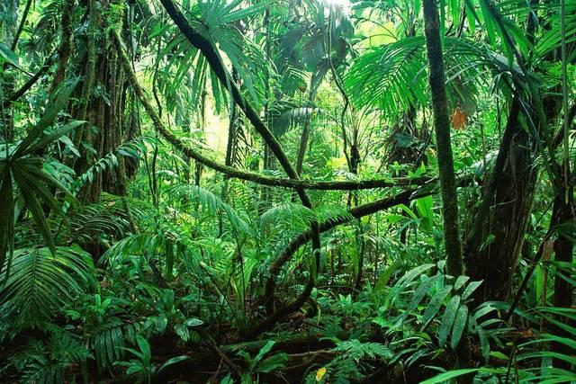 は ジャングル の - Pixabayの無料写真 (611807)