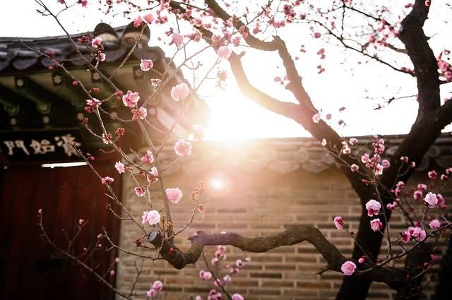 韓国 伝統 故宮 - Pixabayの無料写真 (639356)