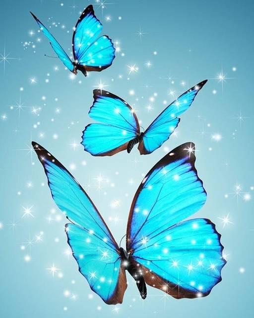 青い蝶ユリシス