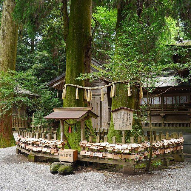 高千穂神社の夫婦杉