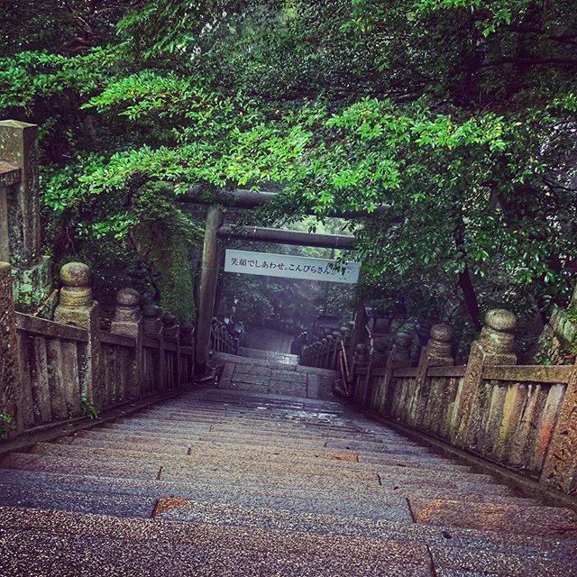 """杉村 侑起/Yuki Sugimura on Instagram: """"【四国一周・香川🍗】長い階段で有名なこんぴらさん(Konpira)#日本 #四国 #香川 #四国一周 #こんぴらさん #japan #shikoku #kagawa #aroundtheshikoku #konpira #鳥居があるので #ここは神社 #神道 #だよ"""" (520892)"""