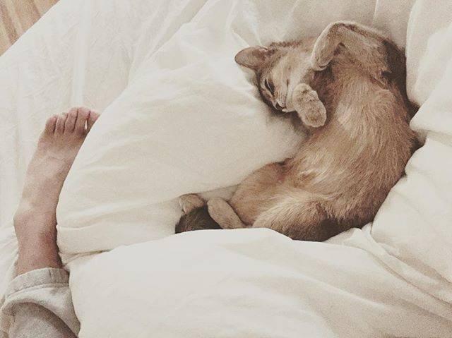 """桃 momo on Instagram: """"幸せな朝でした…♡触っても全く起きなくて、信頼してくれてる証拠なんだなぁって…☺️ #ラピ #旦那の足 #catonbed #abyssinian #アビシニアン"""" (568186)"""