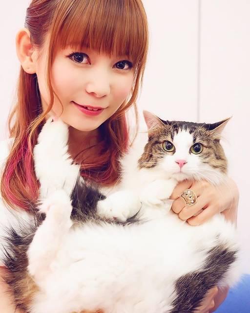 """中川翔子 on Instagram: """"愛猫のピンクちゃん^_^#8月16日に越谷でイベントやります #中川翔子 #しょこたん #猫 #cat #ねこ #動物"""" (590817)"""
