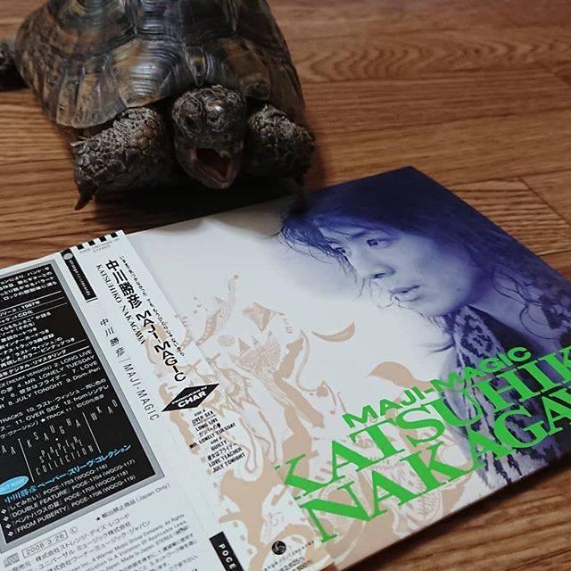 "Takanori on Instagram: ""今日のらいどん。#tortoise #リクガメ #中川勝彦 #今日が命日 #プロデュースはChar #しょこたん のお父さん"" (590849)"