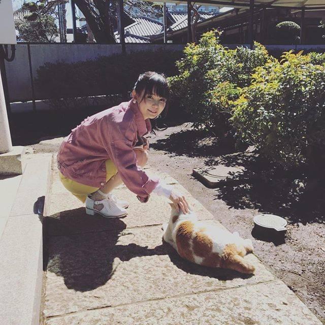 """中川翔子 on Instagram: """"今日は番組ロケで猫と遊んでます♪#中川翔子 #しょこたん #猫 #ネコ #cat #cute"""" (590905)"""