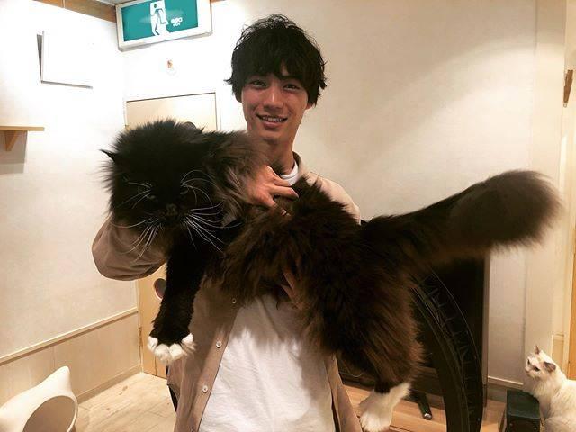 """福士蒼汰 on Instagram: """"めちゃでかい猫!Such a huge cat!! #ある日#猫カフェで"""" (595374)"""