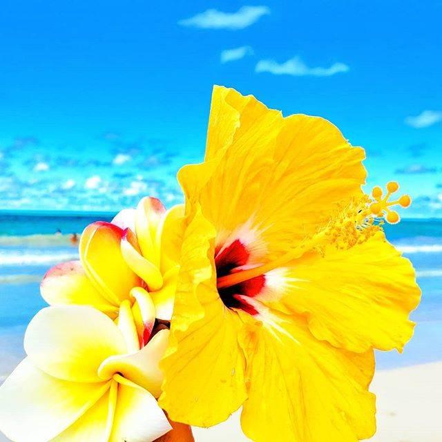 """@sklaire808 on Instagram: """"* * * * #hawaiistateofmind ♡ * * * * * * * * #honolulu #hawaii #plumeria #hibiscus #flowers #beach #bluesky #ocean #kailuabeach #kailuabay…"""" (628558)"""