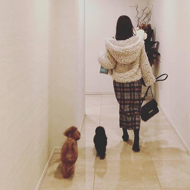 """@rinayamashita on Instagram: """"てくてく👣#dogstagram #山下ポーちゃん #ぼくは鼓太郎 #zara #鼓太郎のファッションチェック"""" (657007)"""