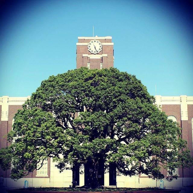 """京都大学 on Instagram: """"くすのき"""" (673161)"""