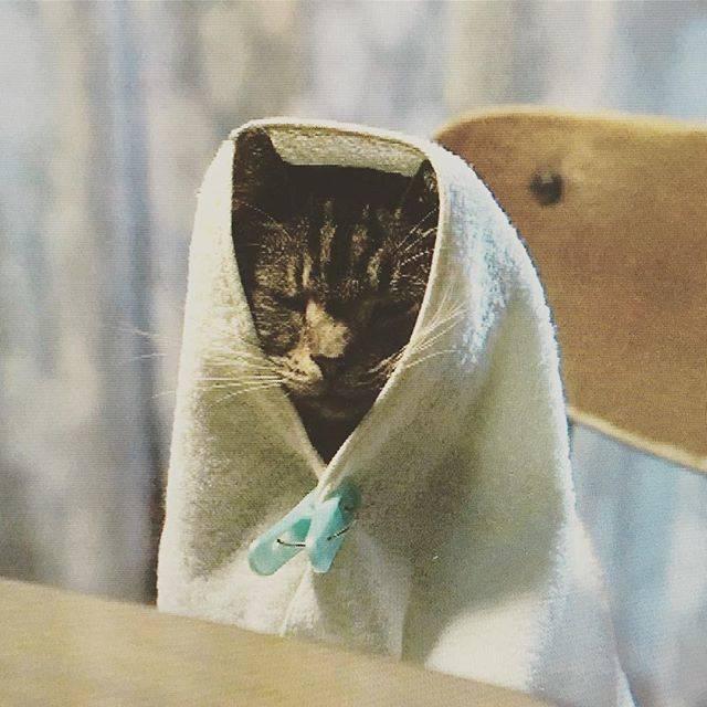 """おたけさん on Instagram: """"#世界から猫が消えたなら  とても心が温まる話でした。 余命宣告されて、大切な物と引き換えに1日命が延びるって言われたら自分はどうするかな…… レタスとキャベツの可愛さにも癒されました。良い映画に出会えた!  #映画 #映画鑑賞  #猫 #世界から猫が消えたなら🐈…"""" (678442)"""
