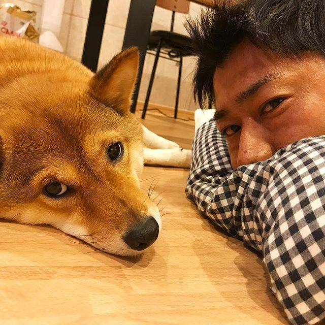 """柴犬 尾形三九 on Instagram: """"ミクと2ショットーー!!!! ミク、さくちゃんのお菓子とか落ちたご飯食べちゃったりして なんか太ったな。。。 せっかくダイエット成功してたのに。。。 ドッグラン行かなきゃ!!!! #柴犬大好き #柴犬マニア  #愛犬  #しばいぬ  #しばいぬ大好き  #shibainu…"""" (684638)"""