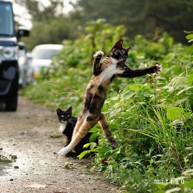 """みっつ on Instagram: """". トリプルアクセル🌀 ・ ・ ・ #ねこ #猫 #neko #cat #のらねこ #野良猫 #外猫 #地域猫 #ねこすたぐらむ #catstagram #僕らの居場所は言わにゃいで #のらねこストーキング部 #straycat #NEKOくらぶ…"""" (687845)"""