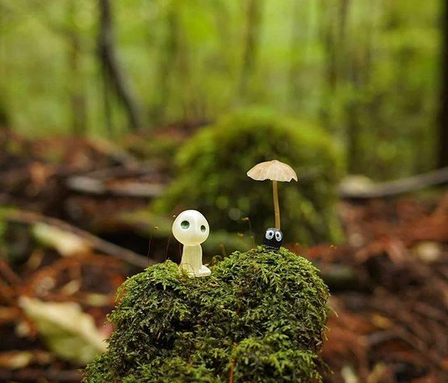 Kichikin Trek 屋久島はInstagramを利用しています:「こだまと秋  #縄文杉トレッキング #屋久島 #yakushima  #登山 #トレッキング #登山好きな人と繋がりたい  #山好きな人と繋がりたい  #登山ガイド #屋久島ガイド  #世界遺産 #世界自然遺産  #屋久島旅行 #屋久島登山 #山が好き #もののけ姫…」 (736081)