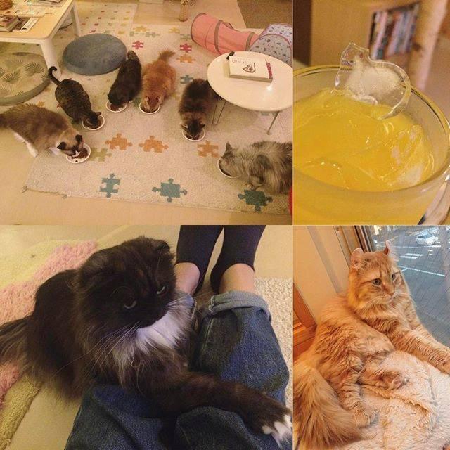 """mochi on Instagram: """"..猫さまちょうどよくお食事タイムなんだこの光景かわいすぎるわたしの足あなたの好きなように使っていいんだよ.#猫カフェ #きたねこ家 #ねこ部 #猫好きさんと繋がりたい #猫好きな人と繋がりたい #猫は癒し #ねこ #neko #札幌 #sapporo"""" (743944)"""