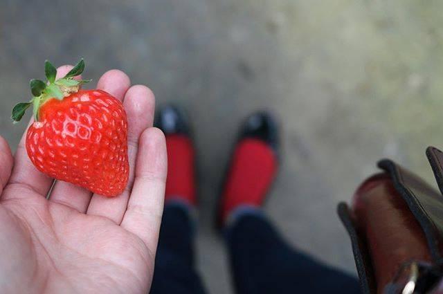 """rico on Instagram: """". 昨日はいちご狩りに行ってきたよ いちご意識して赤い刺繍のブラウスに赤い靴下... #sapporo #いちご狩り #いちご #スノーベリーファーム #おいしすぎた #好きな食べ物 #とちおとめ #さがほのか #おでかけ #足元くら部 #ootd #一眼レフ #一眼レフ女子…"""" (746404)"""