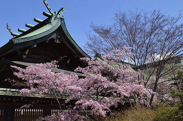 """hiro on Instagram: """"開花宣言になる標本木があるのだけれど、どの桜なのかわからなかった(´Д` ) #室蘭八幡宮 #空 #桜"""" (748619)"""