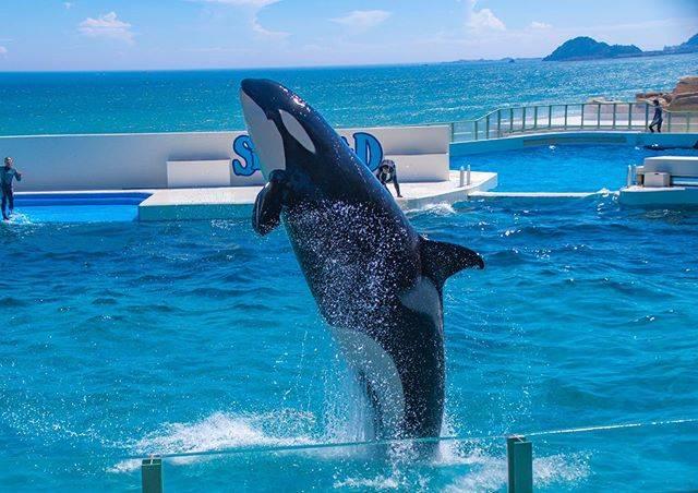 "Kohei Shibata on Instagram: ""前だけど夏休みにずっといってみたかった鴨川シーワールドに行きました。  シャチを見たことないので見に行ったけど想像の5倍デカかった。  #japan #tokyo #pentax #pentaxkp #love #killerwhale whale #orca #水族館…"" (750463)"