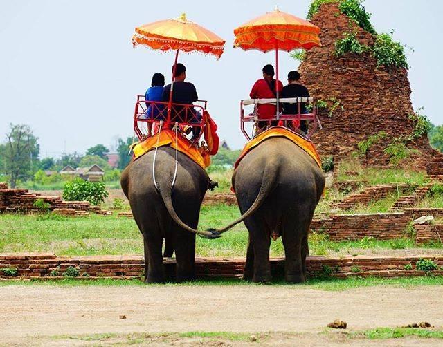 """タイ国政府観光庁 on Instagram: """"サワッディー・カー🙏  今日の #thailovers は、@maxisgroovin さん🇹🇭  世界遺産アユタヤで撮影した1枚🐘✨  2頭の象のしっぽが、まるで手を繋いでいるような可愛らしい写真ですね💞  📷 @maxisgroovin 📍…"""" (763904)"""