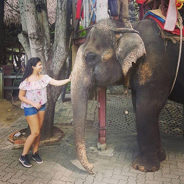 "Yasmine on Instagram: ""Checked off my bucket list. #thailand #bangkok #sampran #sampranriverside #rosegarden #tourist #touristforaday #elephant #elephants…"" (765294)"