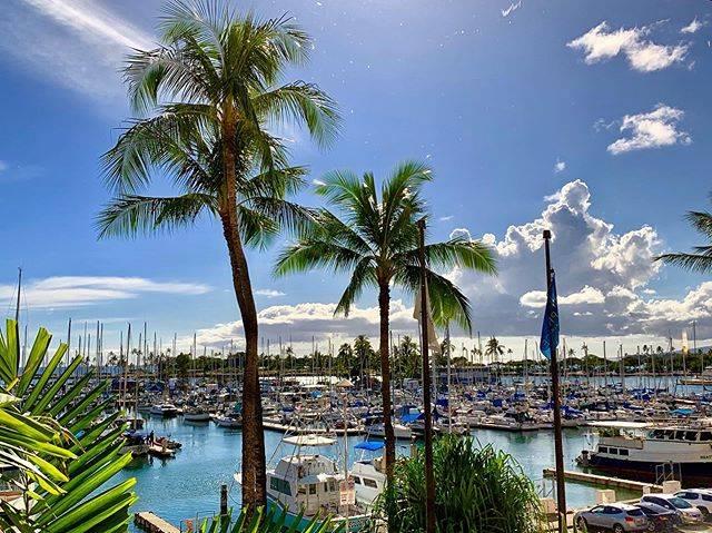 "Riala on Instagram: ""#princewaikiki #yatch #boat #palmtrees #sunnyday #hawaii #waikiki #ハワイ #ワイキキ #ヨットハーバー #椰子の木 #かんかん照り #プリンスホテルワイキキ"" (767696)"