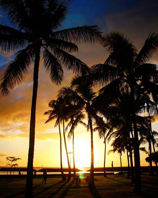 "@kamera_obasan on Instagram: ""#canon#sigma#t6i #hawaii#oahu#sky#sunset #instahawaii#palmtrees  #silhouette #キャノン#シグマ#一眼レフ #ハワイ#オアフ#ホノルル #空#ソラ#カコソラ#夕暮れ #サンセット#椰子#シルエット…"" (767699)"