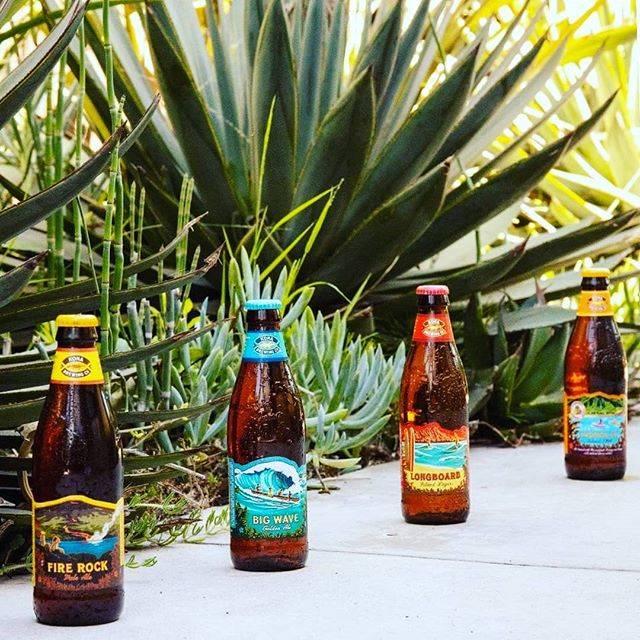"🌴Liquid Aloha🌴 on Instagram: "". 🌺Aloha🌺 毎日冷えますね💦 そんな冬でもKONAビールのラベルが ハワイの風をあなたにお届けします🤗🌈 . Mahalo🌴🌴🌴 . #konabeer #hawaii #craftbeer #aloha #mahalo #alohawinter #コナビール #ハワイ…"" (768887)"