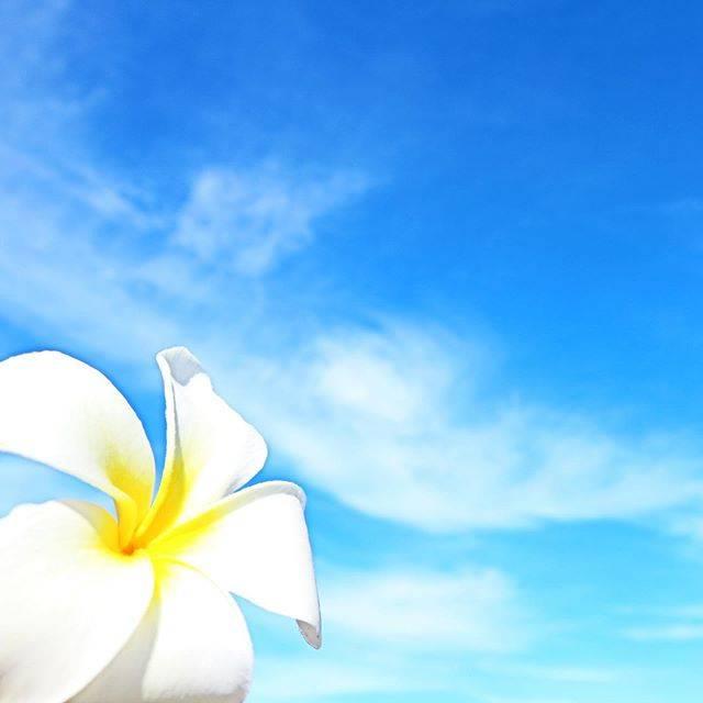 """🤙🏾🌺🏖🐠☀️ on Instagram: """"𓇼 ・ ・ みんなが素敵な2020を  #ハワイ#グアム#サイパン#日本  #常夏#南国#海#カメラ #beach#sunset#camera #GoPro#Canon #Hawaii#Guam#Saipan #ハワイアンジュエリー #ハワイ好きな人と繋がりたい…"""" (769497)"""