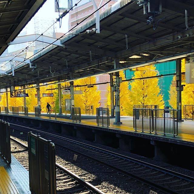 """Toshiharu Tamaki on Instagram: """"#京急品川駅#銀杏#紅葉"""" (770197)"""