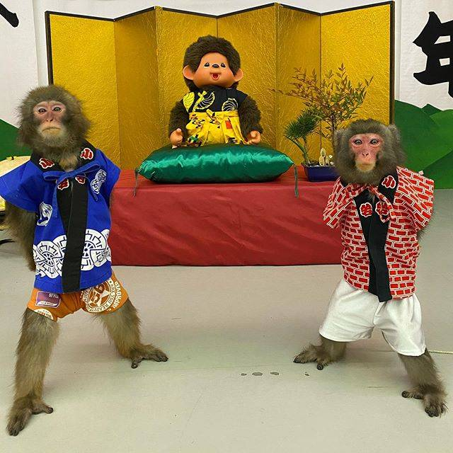 """ASO Monkey Showman Theater on Instagram: """"We are Tonkichi&Kurimatsu🐵. 🎉Best wishes for the holidays and New Year🎉.🎊🥳 ———————————————————————— とん吉&くり松です🐵。 🎍あけましておめでとうございます🎍🌅…"""" (772793)"""
