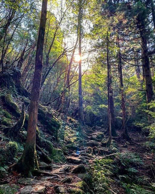"ERI on Instagram: ""Always magnificent✨ #Yakushima #nature #mountain #forest #woods #worldheritage #magnificent #beautiful #屋久島 #白谷雲水峡 #世界遺産 #island"" (777103)"