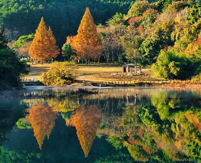 "TAKESHI・T on Instagram: ""昨日は牛頸ダムへ🍁🚗 ・ ・ 初めて行ったけど紅葉にはちょっと早かったかな😂 ・ ・ 今日はヤフオクドームへソフトバンクのファンフェスティバルに初参戦⚾️🚗 ³₃ ・ ・  #大野城市 #こうよう #photo_jpn#pics_jp#福岡#yokaphoto…"" (781288)"