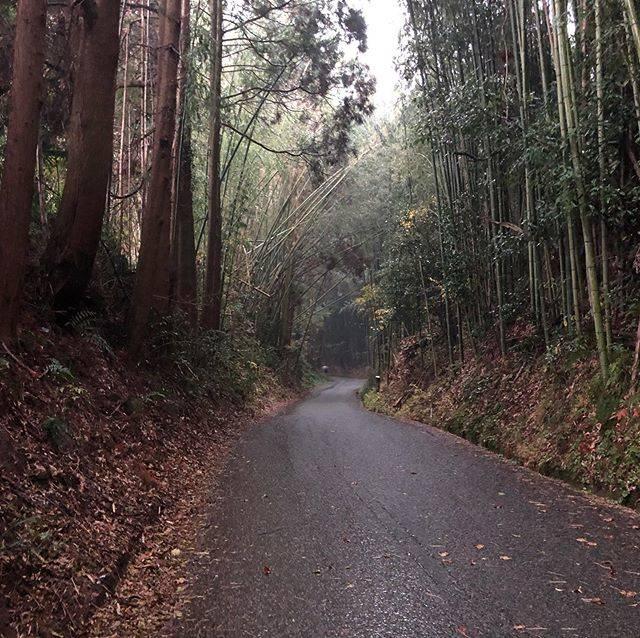 "Eriko Hino on Instagram: ""雨は降る降る人馬は濡れる#田原坂 #jr九州ウォーキング #紅葉 #雷雨"" (782825)"