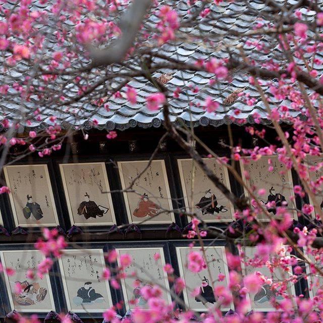 "hideyuki nakao on Instagram: ""東風吹かば匂い起こせよ梅の花 主なしとて春な忘れそ #菅原道真 #北野天満宮 #京都 #梅の花"" (789637)"