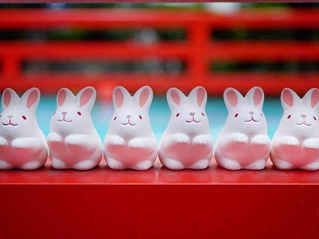 """京のまごころん on Instagram: """". 岡崎神社のうさぎみくじ。🐰💕 家にふたつ飾っていますが、とっても可愛いです。😊 * #京都 #岡崎神社 #うさぎみくじ #うさぎ #おみくじ #可愛い #風景 #そうだ京都行こう #写真好きな人と繋がりたい #日本の風景 #kyoto #okazakijinja…"""" (789664)"""