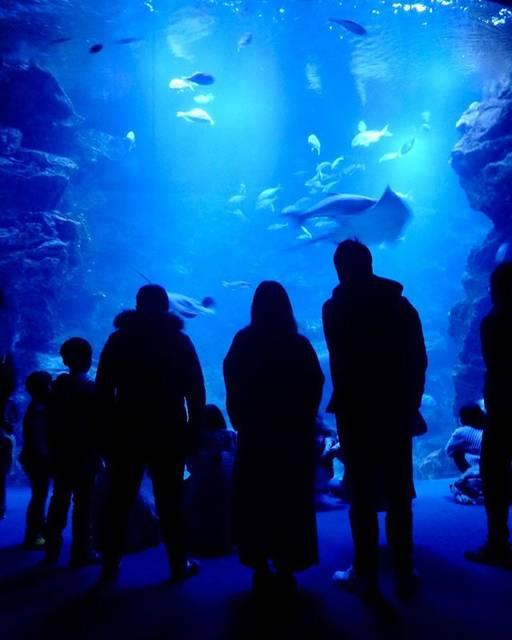 "hillstone on Instagram: ""京都水族館 📗 Kyoto Aquarium @Kyoto Japan 冬の水族館🐠🐧 #kyoto #japan #winter #aquarium #dolphin #photography #camera #winter  #京都 #京都水族館 #東寺 #梅小路京都西駅…"" (789975)"