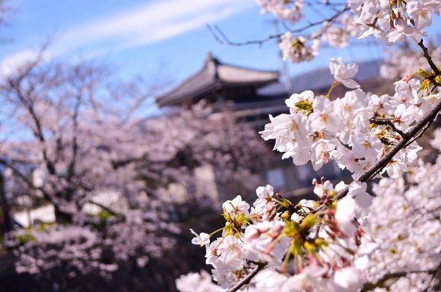 "Ken on Instagram: ""Looking back my journey history. . . . . . . 14. Shukugawa (Japan) . #sakura🌸 #wevisitjapan #weroamjapan #tankensurujapan…"" (791156)"