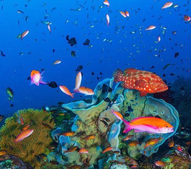 """会社に縛られず自由に生きたい人向け起業プロデュース専門家 on Instagram: """"久々に水中世界へ‼️‼️  インドネシア🇮🇩バリ島のトランバンは 綺麗なスポットがいっぱいです😊  クリーニングステーションには 様々な魚が溢れてました🐠  青い海に赤い魚のコントラストは 最高ですよ🎶  #自分らしいライフスタイル #ノマドワーカー…"""" (791324)"""