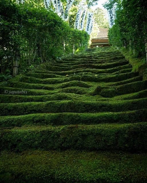 """じゃぱたびっくす on Instagram: """"神奈川県鎌倉市『杉本寺』  2019年6月参拝 二階堂にある鎌倉最古の寺 杉本寺。 ここの石段も苔に覆われて大変美しいです。  ロケーションは前回投稿した妙法寺の方が森の中で落ち着く。杉本寺は道路に面してるしね。  妙法寺と杉本寺は結構離れてるので歩いて巡るのは大変そう。…"""" (792159)"""