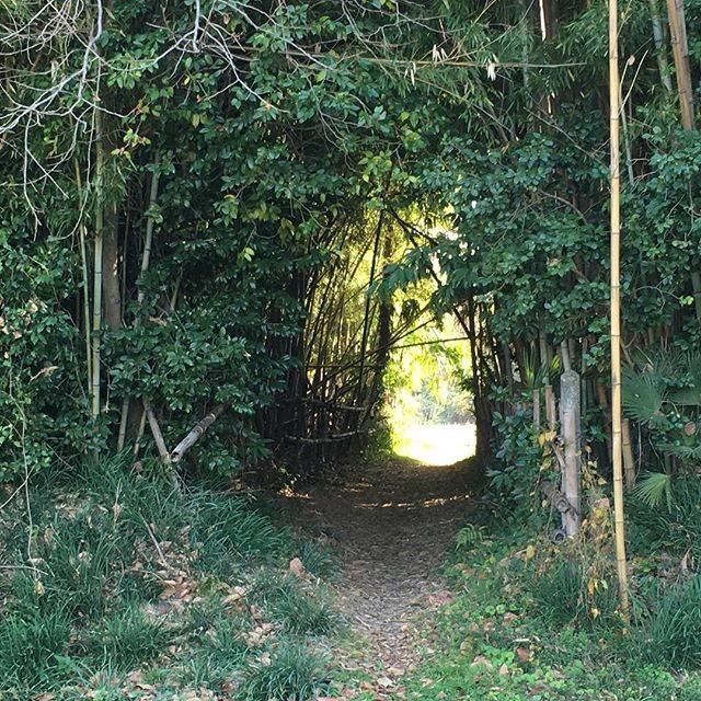 "✨ on Instagram: ""#薬師堂のマキ 入り口何か、隠れ里のようなところでした。#秋ヶ瀬 #秋ヶ瀬公園"" (793025)"
