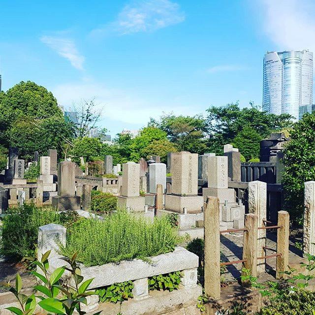 "🗼France から🏯 on Instagram: ""The quiet life from Aoyama  #青山 #青山霊園 #霊園 #cemetery #六本木 ##Japon #japan #日本 #東京 #ig_japan #igjapan #jp  #ig_colors #🗾#⛩️ #ilovejapan #Tokyo…"" (794848)"