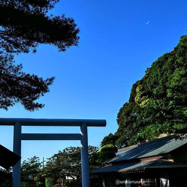 """ねこひげ on Instagram: """"千葉 / 館山  安房(あわ)国 一之宮 #安房神社 にて。  成田に向かうボーイングと鳥居。 . 🚶🐈🐾 この物語はリアルタイムで進行する。 これは16:00〜17:00の出来事である。 . #旅したくなるフォト #旅の思い出 #旅行好きな人と繋がりたい…"""" (795343)"""