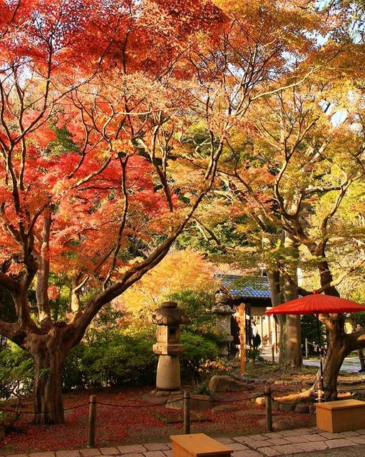 "Osamu Nariai on Instagram: ""#鎌倉宮 #紅葉 🍁#鎌倉散歩"" (796720)"