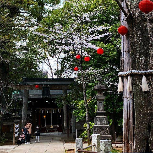 "Yachiyo(やちよ on Instagram: "". 赤坂氷川神社にはとてもとても優しい神様がいるように思う。 大空襲で空洞になっても咲き続ける大銀杏も圧巻。 まだ2回目だけど、とても落ち着く神社です。 ちょっと遠いんだけど深大寺も好き。 お気に入りのお寺や神社、ありますか?☺︎ . #お寺 #神社 #おみくじ #赤坂…"" (797942)"